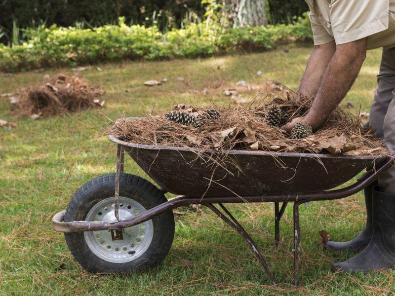 Cuánto cuesta limpiar un terreno