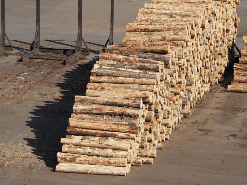 Venta ocasional de madera: cómo se declara en la Renta